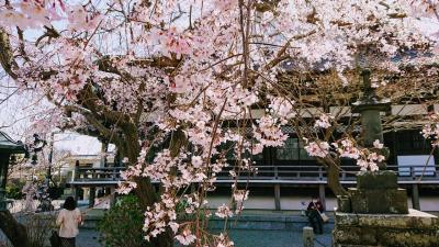 桜が咲き始めた鎌倉