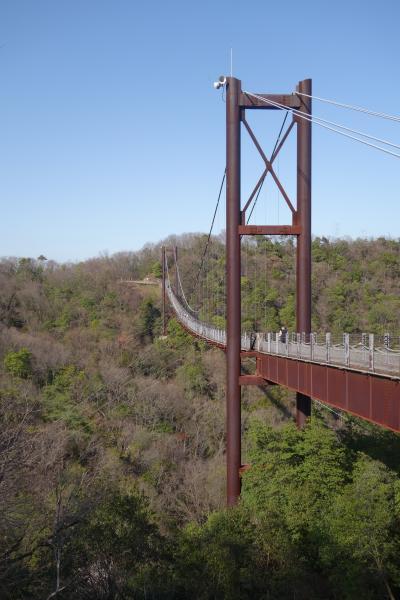 20210318-3 交野 星のブランコって、ブランコやなくて吊橋なんやね。ほしだ園地。
