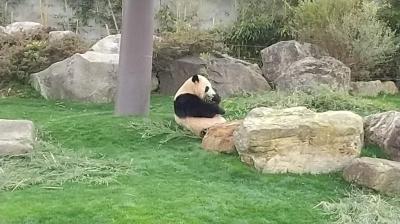 グルメとパンダとオーシャンビューホテルの温泉を楽しむ