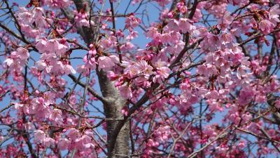緑ヶ丘公園まで市バスで行き、花の写真を撮りながら帰りました その3。
