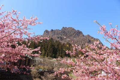 道の駅みょうぎの河津桜と秋間梅林へ行ってみました