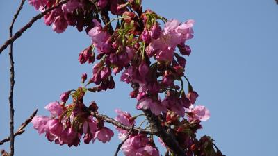 緑ヶ丘公園まで市バスで行き、花の写真を撮りながら帰りました その4。