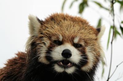 甲府市遊亀公園附属動物園  天国に旅立ったクゥちゃんにお別れの挨拶に行ったのに・・・まさかホクト君と会うのもこれが最後になるなんて・・・