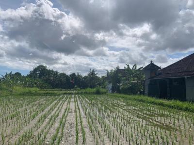 まだバリ島は雨季ですね