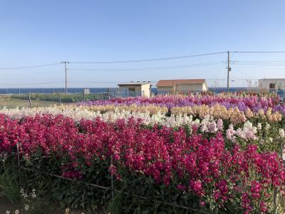 2月の南房総 お花畑