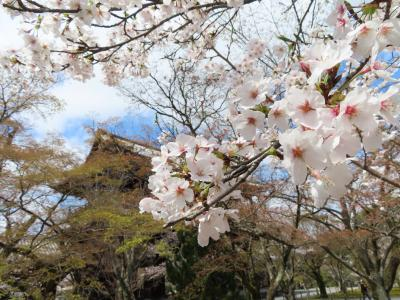 COVID-19対策の自主隔離を終えて☆京都初日ー3 ドンクでランチと桜のお花見