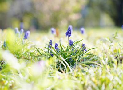 Japan 病院の待ち時間に芝公園へ6    ~ミツバチばあやの冒険~