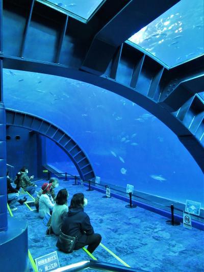 1時間ではとても見切れなかった「沖縄美ら海水族館」