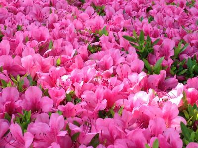 日頃の感謝を込めて!主人の誕生日プレゼントで東京へ★備忘録の浅草散策とランチ♪2021年今朝の桜便りも♪