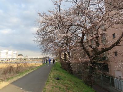 春の息吹を探しに浅川土手を散策 八王子 2021/03/20