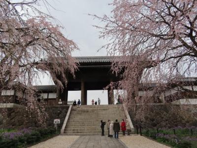 東郷寺の山門とシダレ桜 府中 2021/03/22