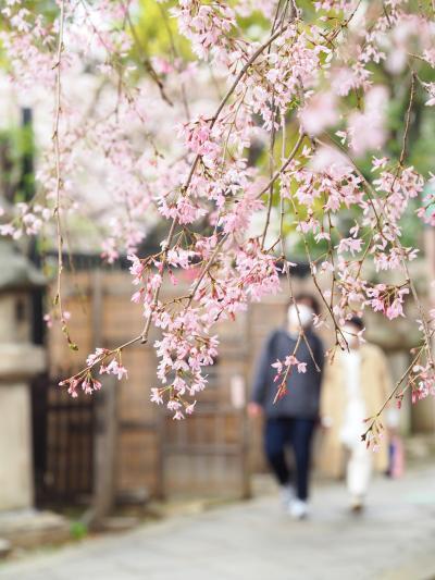東京満開宣言?!上野公園と東京ミッドタウンの桜 2021.3.22
