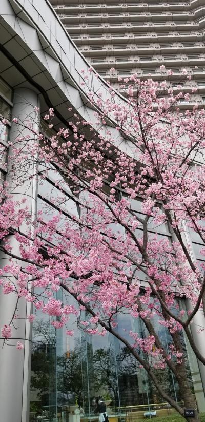 ふらっと桜ノ宮お散歩 桜と造幣局博物館です♪ちょこっと奈良もね♪