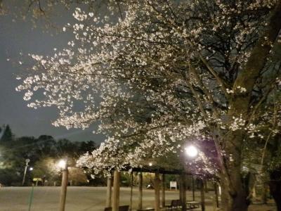 L MAR 2021  プチ花見・・・・・①武蔵関公園の夜桜