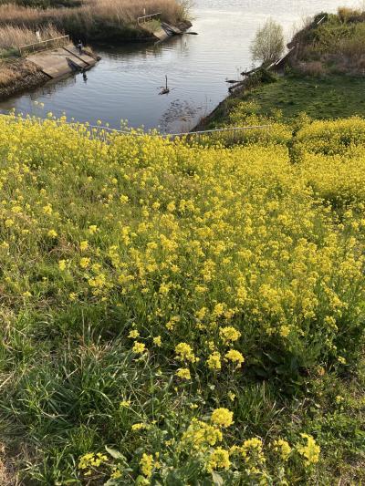 松戸宿と戸定公園と江戸川