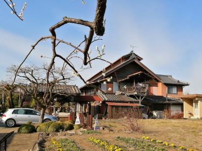 島村に春が来た!