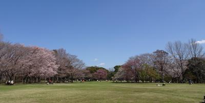 桜めぐり2021 柏の葉公園