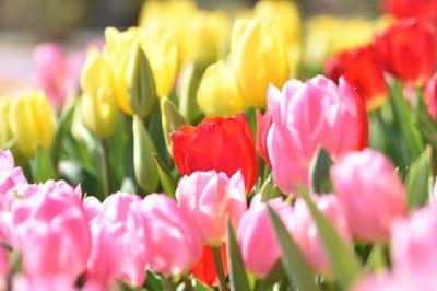 たくさんの春を感じにo .。.:*☆フラワーパークへ行ってみようヽ(´▽`)/