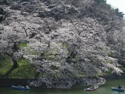 2021年満開の千鳥ヶ淵の桜
