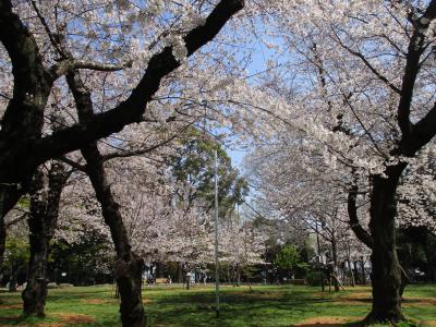 2021年3月 桜(王子)