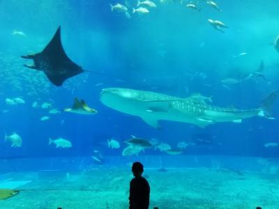 2021 3月 沖縄二日目 5歳子連れ 美ら海水族館、ゴリラチョップ、名護