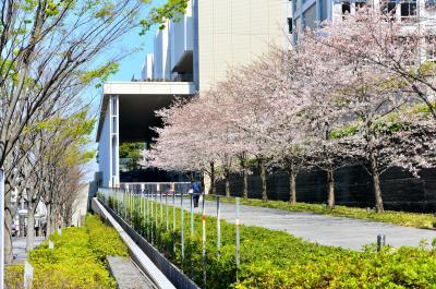 一年後の慶応日吉キャンパス再訪。消えてしまった100円マック。200円マック2個持ち帰りでの昼食。