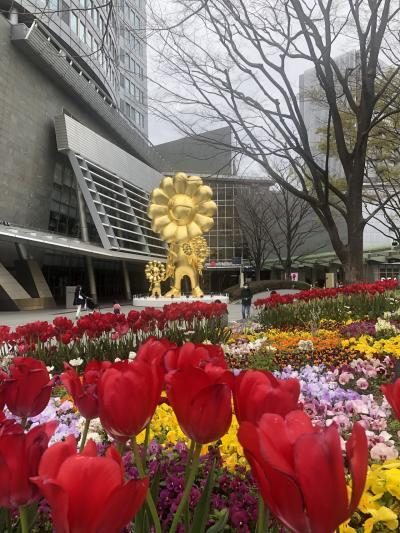 桜満開の新宿御苑と一人焼肉
