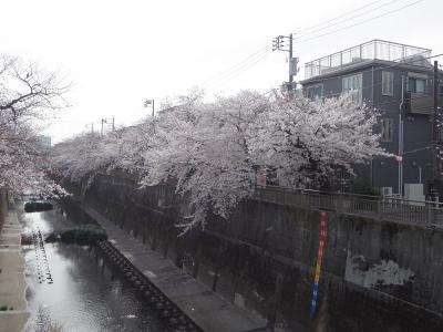 毎年恒例 石神井川桜見物 2021Ver