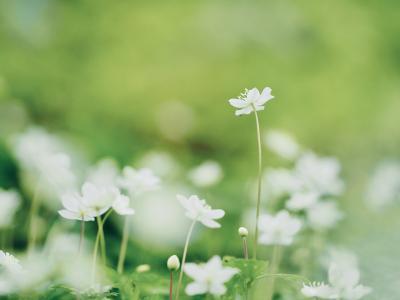 泉自然公園 春を彩る花達