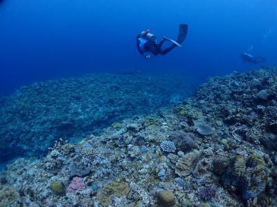 2021 潜り始めは春濁りでも楽しい慶良間の海へ
