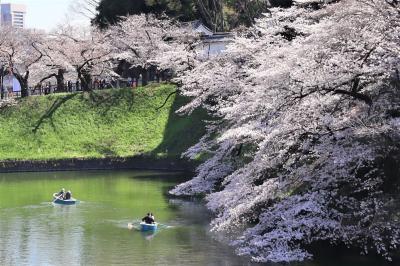 千鳥ヶ淵&靖国神社の桜開花状況