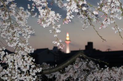 20210325-2 京都 京都タワー写せへんかなと、夕暮れから川端通りを行ったり来たり