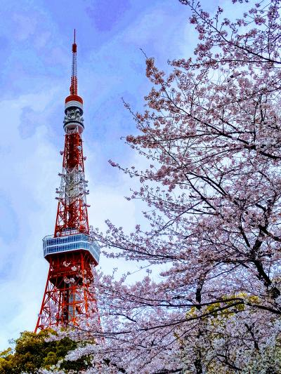 お花見しよ♪ @東京