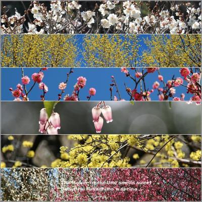 ◆梅の香ただよふ春色の福島そぞろ歩き