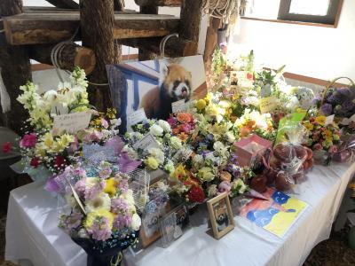茶臼山動物園  海外のファンも多かった世界に誇るハッピーパンダ!! ロン君・・・ほんとうにありがとう、君の事はけして忘れないよ、やすらかに