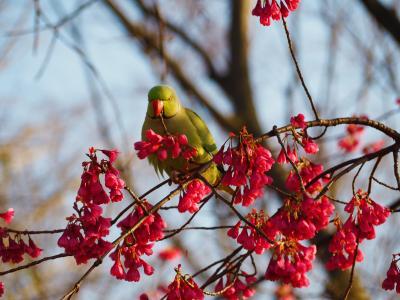 東京に買い物行った帰りに早咲きの桜が少し咲いてる上野に寄りました