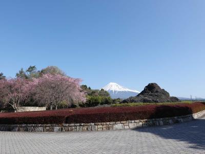 自転車でGO! 2021.03.24 =広見公園&富士総合運動公園の桜=