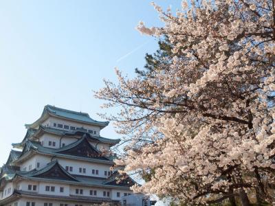 名古屋城でお花見 名古屋市市政資料館 RAYARD Hisaya-odori Park 「炭焼きやきとり×とりの唐揚 レアル」で夜ご飯