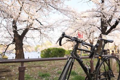 大塚~王子~上野  桜サイクリング