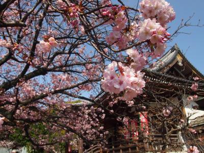 2021年3月 上野公園・寛永寺周辺 その2