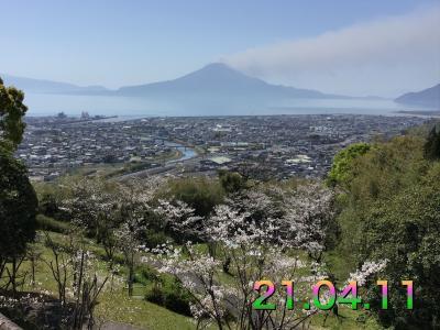 高岡公園に桜を見に行ってみた
