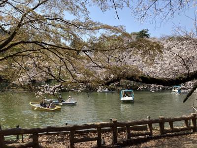桜満開!井の頭公園と写真家ドアノー/音楽/パリ観覧記