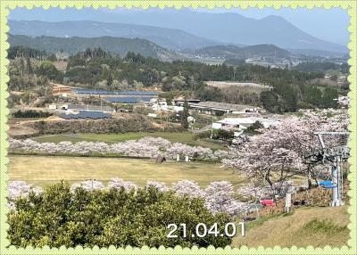 観音池公園に友達と桜を見に行ってきました