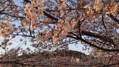 【旅行記じゃないけど】晩御飯はいつもの所、桜見ながら歩きましょう。<梅田川川岸>