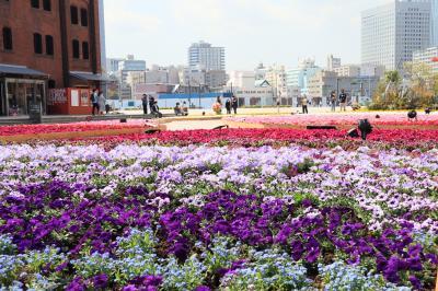 みなと横浜、春の花散歩・・・