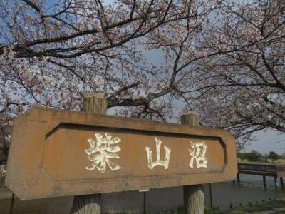 白岡市の「柴山沼」で桜を見ながら散策してから「柴山伏越」と「ガーデンプレイス・花のワルツ」へ