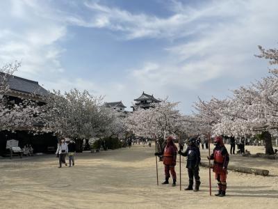 桜を見に松山城へ