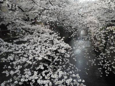 2021年目黒川沿いの桜