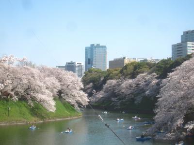 あちこち行ってみた 都内桜の名所2021