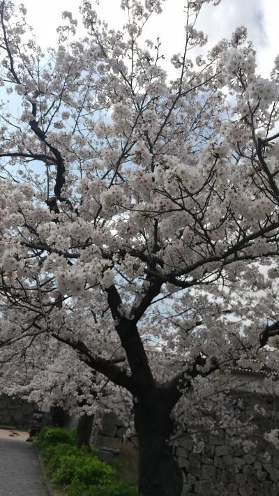 どこかにマイル第5弾!春の福岡&由布院への旅。桜が満開だよー(^3^)/